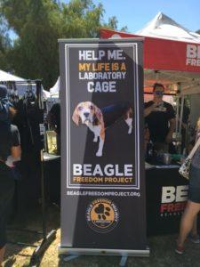 ビーグル犬の保護団体